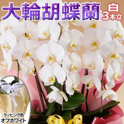 日本フラワー ギフト用品 フラワーギフト 10001-WH
