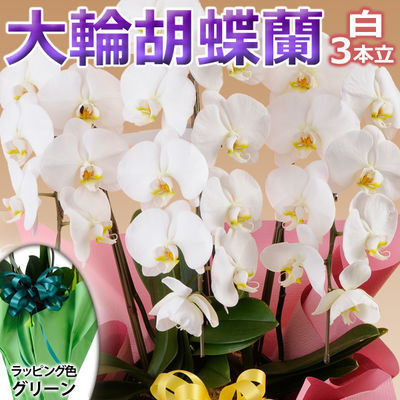日本フラワー ギフト用品 フラワーギフト 10001-GR