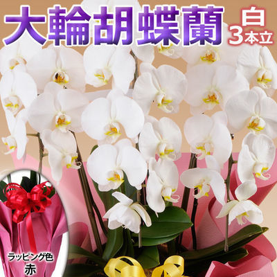 日本フラワー ギフト用品 フラワーギフト 10001-RD