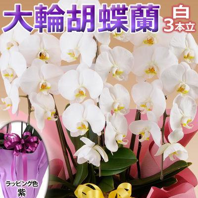 日本フラワー ギフト用品 フラワーギフト 10001-PL