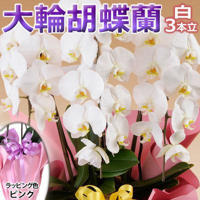 日本フラワー ギフト用品 フラワーギフト 10001-PK