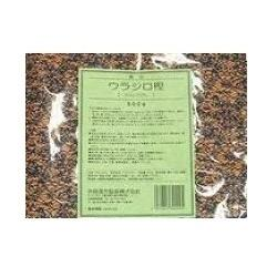 【堀江生薬】ウラジロガシ(裏白柏) 短冊 500g ※お取り寄せ商品